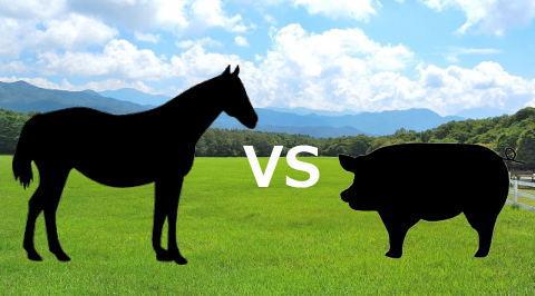 プラセンタサプリは馬由来と豚由来どっちがいい?