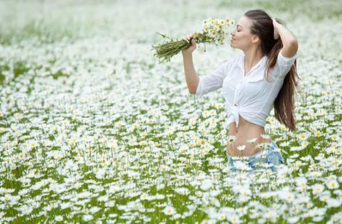 カモミール畑で花の香りを楽しむ女性