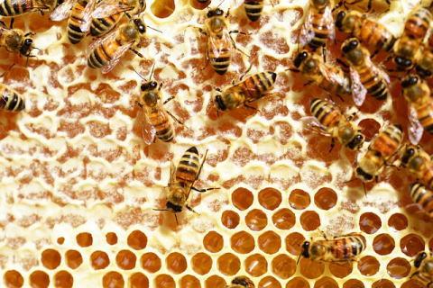 蜂の巣とミツバチ