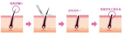 カミソリでムダ毛処理した場合の毛の断面図