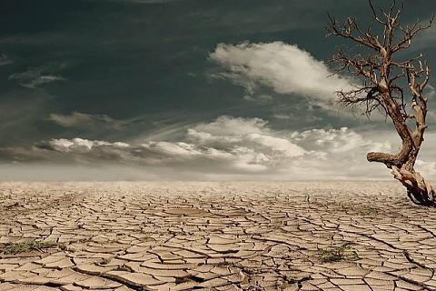 乾燥した土地